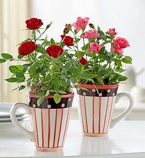Mini rosas em canecas