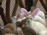 Uma Páscoa muito feliz