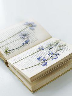 detalhes florais