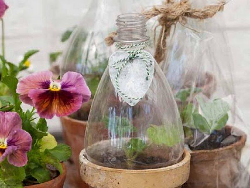 Terrarium com garrafas pet