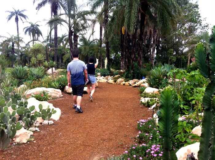 inhotim jardim de cactos