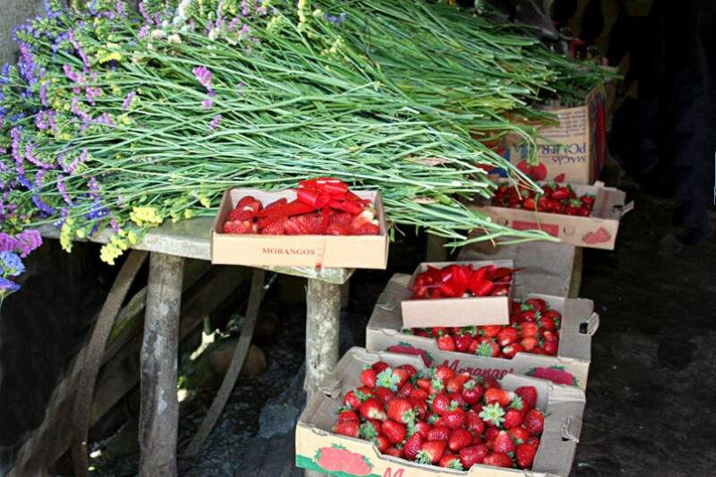 Flores e Morangos: delícias do interior catarinense