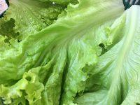 Como guardar verduras na geladeira