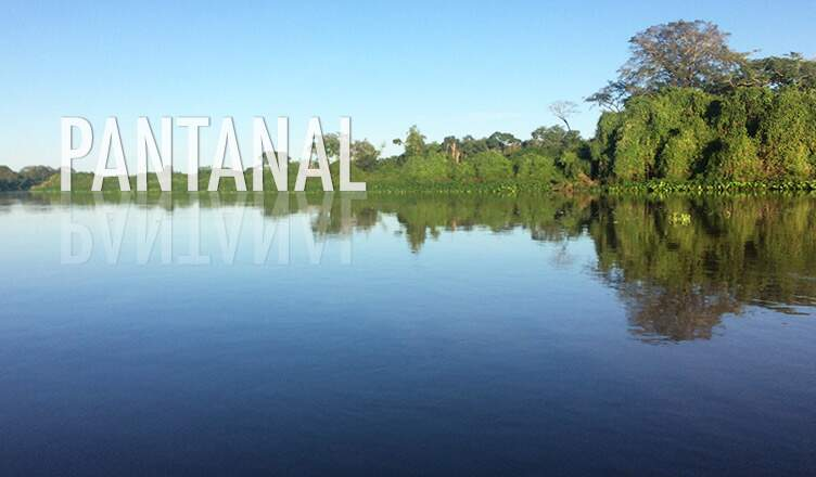 Pantanal: uma imersão na natureza