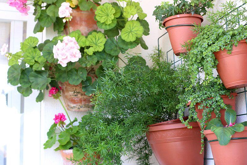 Como fazer um jardim na varanda