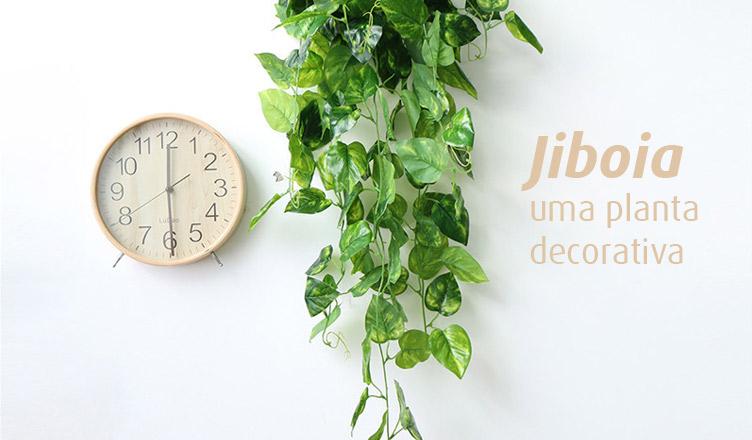 Jiboia: uma planta decorativa