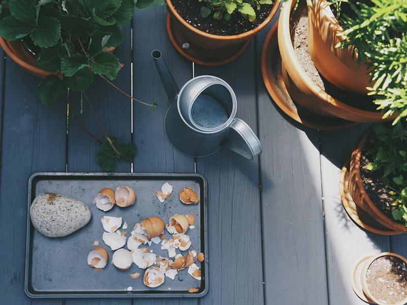 casca de ovo - cálcio para as plantas