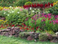 No jardim da Ildinha
